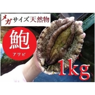AU95◇【漁港直送】海水パックでお届け!淡路島産天然活きあわび超特大サイズ 約1kg