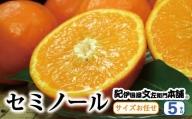 セミノールオレンジ 約5kg/サイズおまかせ ※2021年4月中旬~5月上旬頃に順次発送予定(お届け日指定不可) 紀伊国屋文左衛門本舗