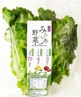 【ふるさと納税】みらい乃野菜 ふわレタス 15株セット