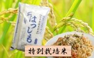 特別栽培米★精米10kg(分搗き可)または玄米11kg【ハツシモ】
