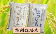 特別栽培米★白米4kg【ミルキークイーン・ハツシモ】
