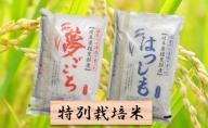 特別栽培米★白米4kg【夢ごこち・ハツシモ】
