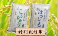 特別栽培米★精米20kg(分搗き可)または玄米22kg【ハツシモ・コシヒカリ】
