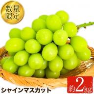 竹下果樹園のシャインマスカット 約2kg(3~4房) 《8月上旬-9月上旬頃より順次出荷》 熊本県長洲町産 竹下果樹園