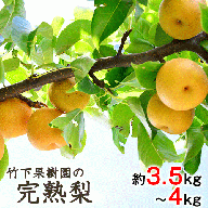竹下果樹園の完熟梨 (あきづき・甘太・新高) 約3.5kg~4kg (3~8玉)熊本県長洲町産《9月上旬-10月中旬頃より順次出荷》