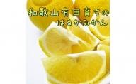 AB6311_【人気柑橘】有田育ちのはるかみかん(ご家庭用) 約5kg