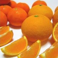 AB6065_有田育ちの濃厚柑橘詰め合わせセット 約7.5kg