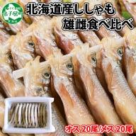 708. 北海道産 ししゃも 雌雄 食べ比べ セット 40尾 シシャモ 海鮮 魚介