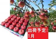 りんご 青森産 約5kg 丸福 サンふじ 光センサー 選果 糖度 12度以上【1月発送】