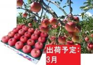 りんご 青森産 約5kg 丸福 サンふじ 光センサー 選果 糖度 12度以上【3月発送】