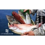 EW01◇淡路島由良港から産地直送!おまかせ鮮魚ボックスA