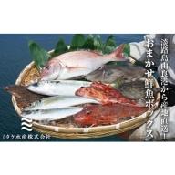 EW02◇淡路島由良港から産地直送!おまかせ鮮魚ボックスB