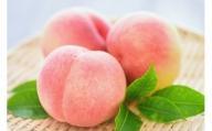 《事前予約》《期間・数量限定》飛騨の桃 秀品 品種おまかせ 中サイズ12~13玉入(2.7~3kg)[B0119]