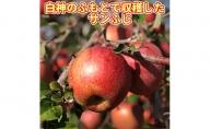 【青森県産りんご】白神のふもと『風丸農場』青森の新鮮りんご サンふじ(約5kg)