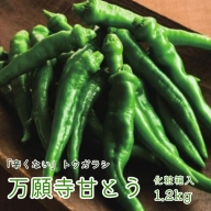 【ふるさと納税】甘い!美味い!辛くない!京のブランド産品「万願寺甘とう」