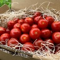 《事前予約開始》初代『飛騨美濃特産トマト名人』に選ばれたトマト名人坪根邦一の作る特別栽培ミニトマト 1kg 飛騨産