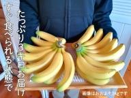 超希少!国産完熟バナナ(美浜町産)モッチリ系の品種をたっぷり3kgすぐ食べられる状態でお届け!※9月下旬ごろから順次発送