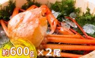 【おすすめ】新湊産紅ズワイガニ約600g×2尾【棚辺水産】