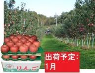 1月 大地農産  家庭用サンふじ約10kg【訳あり】【大江町産・山形りんご】