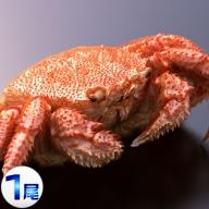 北海道網走産 毛ガニ 440g前後 1尾 【三洋食品】