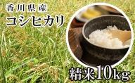 はなまる農園 令和3年 新米予約 香川県産「コシヒカリ(精米)10kg」