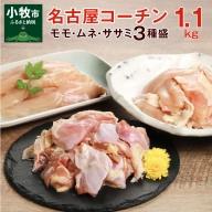 モモ ムネ ササミ 名古屋コーチン3種盛<1.1kg>大満足セット[001T03]