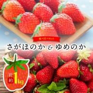 【令和4年2月発送】尾鈴産いちご食べ比べセット(さがほのか&ゆめのか)