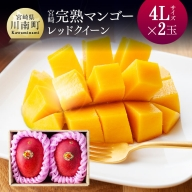 完熟マンゴー『レッドクイーン』2玉×4L (1000g以上)
