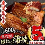 b0-085 鹿児島県志布志市産【無投薬】鰻師の蒲焼120g以上×5尾(計600g以上)