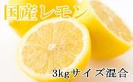 【産直】和歌山産レモン約3kg(サイズ混合)