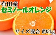 和歌山有田産セミノールオレンジ約5kg(サイズ混合)