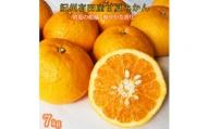 紀州有田産 初夏の柑橘 甘夏みかん 7kg