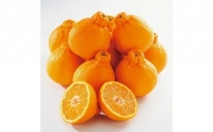 【2021年3月上旬以降出荷】太陽の恵みたっぷりの春柑橘 デコ娘(不知火) 約5kg(赤秀/贈答用)