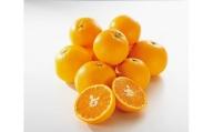 【2021年3月上旬以降出荷】希少柑橘 甘くて爽やかな春柑橘 春峰 約5kg〈赤秀/贈答用〉