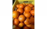 【2021年2月中旬以降出荷】希少な春柑橘『津之輝(つのかがやき)』 約10kg〈赤秀/贈答用にも〉
