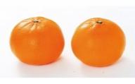 【2021年2月中旬以降出荷】希少柑橘 和歌山県有田郡内産 せとか 5kg (赤秀/贈答用にも)