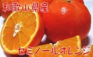 【春の美味】【農家直送】爽快カンキツ セミノールオレンジ(ご家庭用)4kg