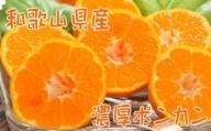 【冬の美味】【農家直送】濃厚ポンカン(ご家庭用)4kg