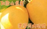 【農家直送】【爽快柑橘】爽やか河内晩柑(ご家庭用)3.5kg