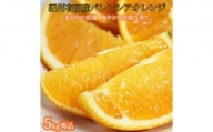 秀品 希少な国産バレンシアオレンジ  5kg