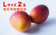 <先行予約>宮崎県産完熟マンゴー(300g×2玉)Lサイズ※2021年4月~8月の収穫期間内出荷【B454】