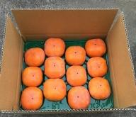 NS-01 西本農園の次郎柿