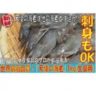 A305.世界最高品質!お刺身品質「天使の海老」1kg(生食用)