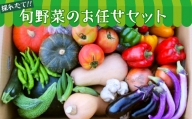 【数量限定】旬野菜のお任せセット