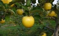 豆のまち本別の「こだわり豆7種セット」【V003】