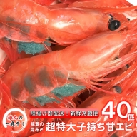[D023] 【1~4月発送】姫丸の昆布〆特大甘エビ50匹(獲れたて鮮度抜群!まるごと昆布〆!)