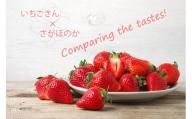 BC016 いちご食べ比べ いちごさん さがほのか