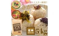 CI043 【玄米】さがびより5kg 【五つ星お米マイスター厳選!】
