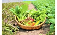 CQ002 オーガニック葉物野菜セット【植物性で育てた完全無農薬の葉野菜ブランド有機JAS】「6回定期便」(CQ002)