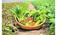 CQ001 オーガニック葉物野菜セット【植物性で育てた完全無農薬の葉野菜ブランド有機JAS】(CQ001)